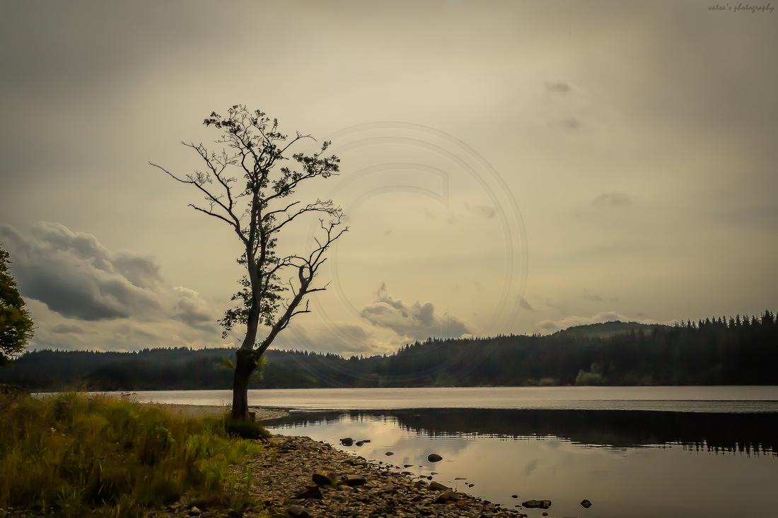 """Aberfoyle, """"Loch Ard"""", """"Loch Lomond and the Trossachs National Park"""", Serene, Tranquil, Aberfoyle, Kinlochard"""